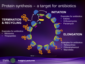 Protein synthesis - a target for antibiotics