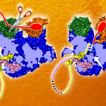 In full view: structure of the influenza polymerase resolved
