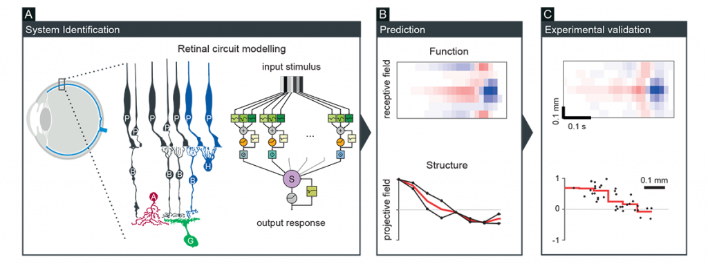 Figure 1: Theory-driven approach for neural circuit characterization, followed by experimental validation.