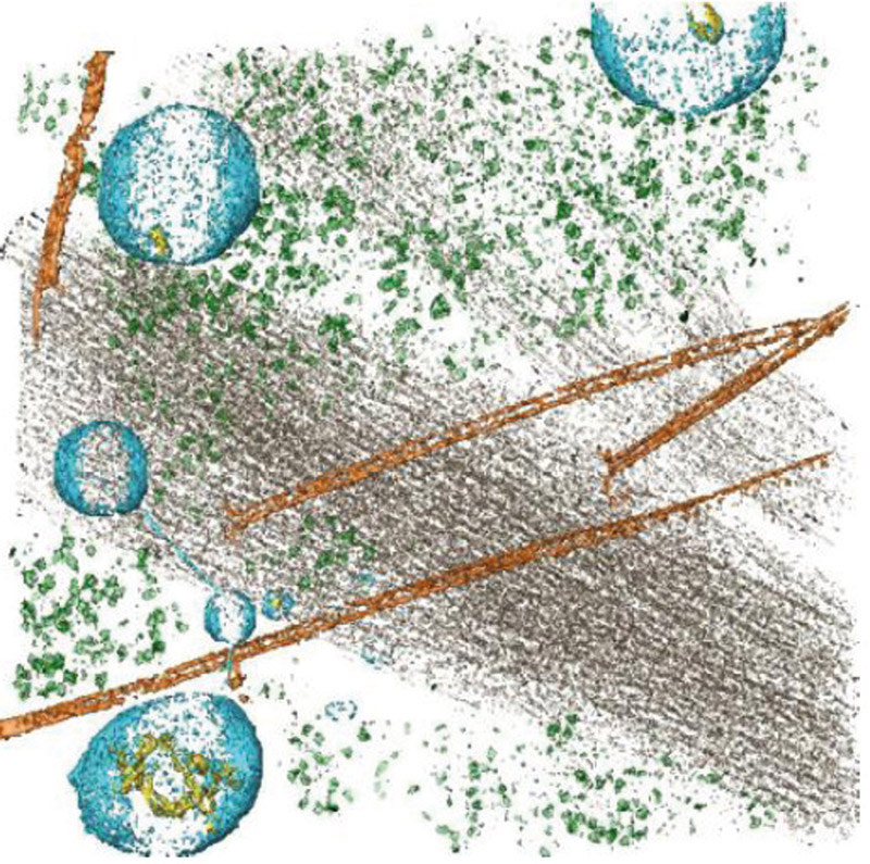 Figure 1: Cryo-electron tomogram of a fraction of the cytoplasm of a human cell. Microtubules are coloured in orange, stress fibres in grey, protein complexes in green, membranes in cyan and vesicular contents in yellow.