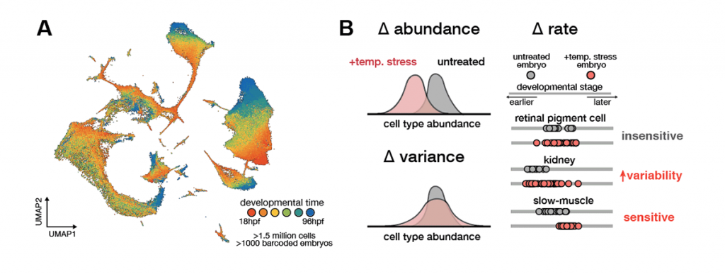 Figure 2: Multiscale phenotyping with single-cell genomics to identify environmentally sensitive developmental processes.