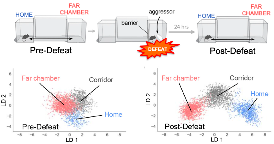 Figure 2: Social experience-dependent neural encoding of spatial context in the ventromedial hypothalamus (Krzywkowski et al., eLife 2020).