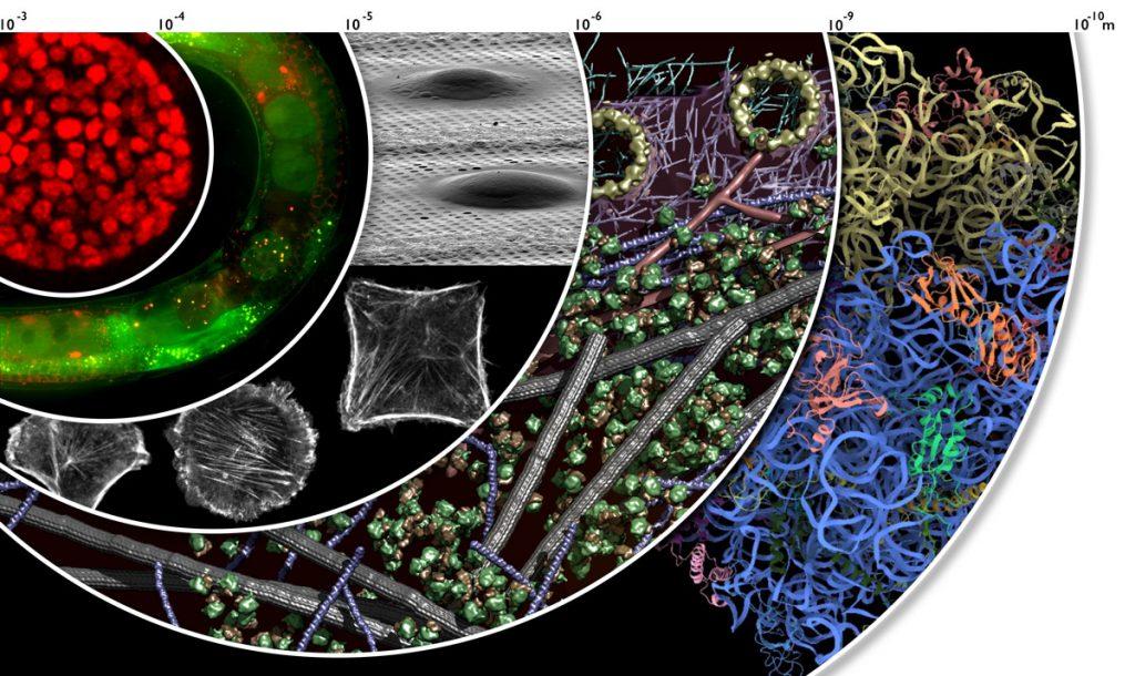 Figure 1: Cryo-electron tomograms of intact cells