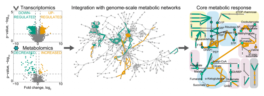 Figure 1: Multi-omics integration with graph-based approaches on genome-scale metabolic networks