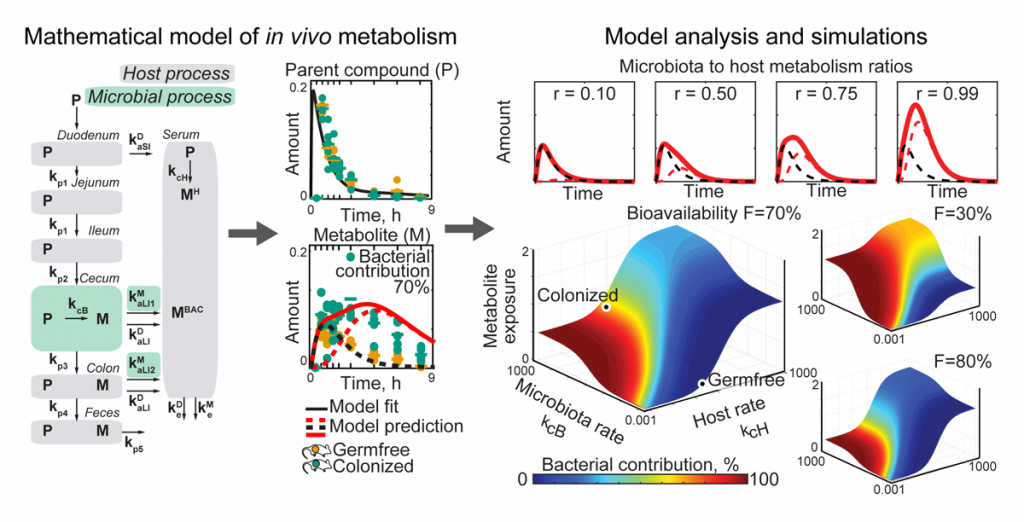 Figure 2: This physiology-based pharmacokinetic model describes drug metabolism processes in the host, including the microbiota component; quantifies bacterial contributions to the production of drug metabolites from time-course metabolomics data; and allows us to predict how perturbations (e.g. nutrients, antibiotics, medical interventions) change microbiota contributions to host metabolism. Adapted from Science 2019.