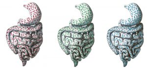 Artistic impression of the 3 human gut types.