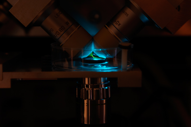 The new microscope that developed by scientists at EMBL, which can follow single molecules by the millisecond Credit: EMBL/H.Neves.
