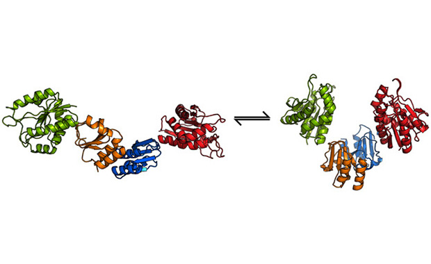 Structure of viral endolysin