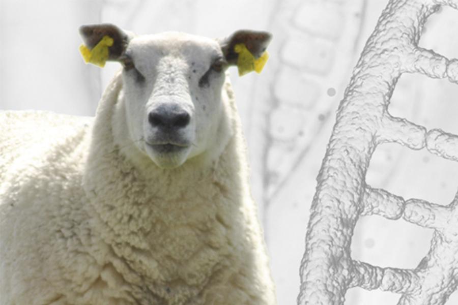 Sheep Genome