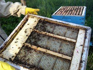 The pollen trap used by Arkadiusz to collect pollen. PHOTO: ARKADIUSZ JANKIEWICZ