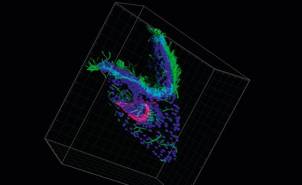Microscopy image of sea urchin larva