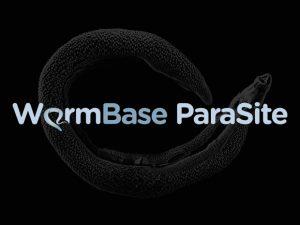 WormBase Parasite