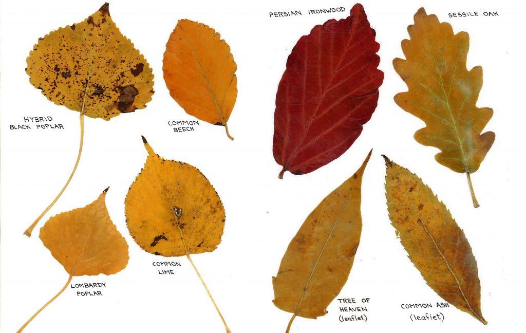 leaves_2_crop