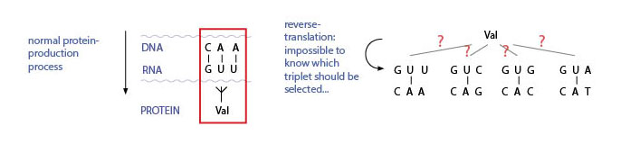 The multiple potential solutions induced by reverse-translation. IMAGE: M.BECK-OIPA