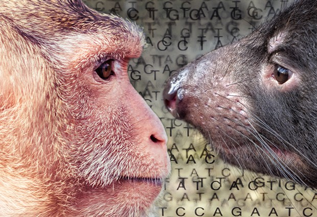 Gene expression in 20 mammals