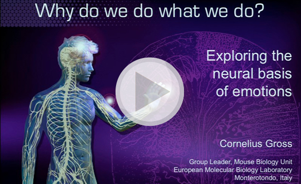 Insight lecture 2014: Why do we do what we do? Exploring the neural basis of emotions. View video on demand.