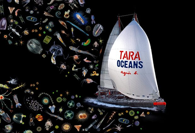 35000 samples were collected from all the world's oceans during the 2009–2013 expeditions. IMAGE: Plankton: Noe and Christian Sardet / Plankton Chronicles; Boat: F.Latreille / Tara Expéditions