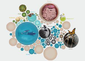 Metagenomics data at EMBL-EBI