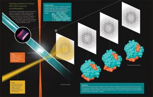 Viewing proteins in motion with time-resolved crystallography