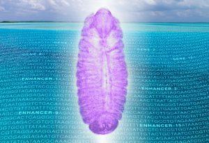 Drosophila embryo over sea of noncoding RNA