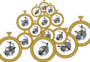 Artist's interpretation of the mouse epigenetic clock.