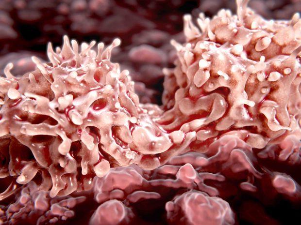 HipSci stem cells