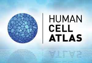 Human Cell Atlas logo and motif