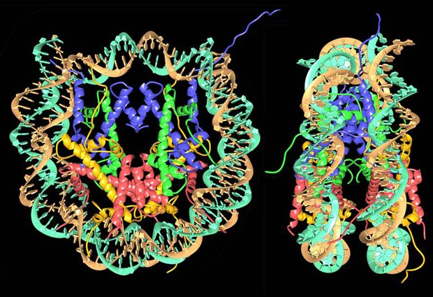 high-resolution nucleosome structure