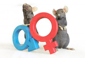 Is the sex of animals misdirecting research?