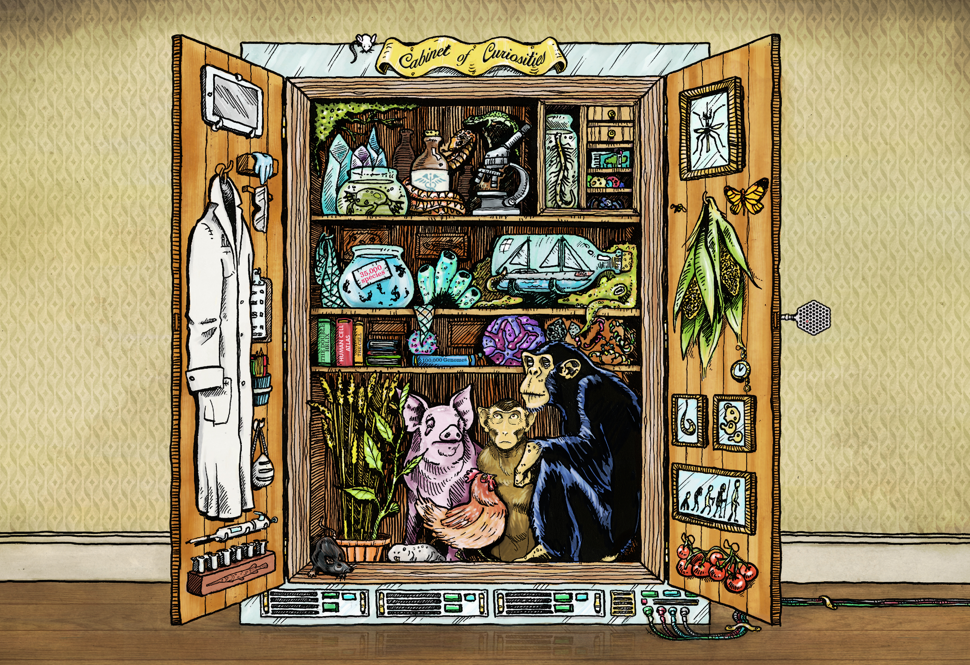 Artist interpretation of the database as a cabinet of curiosities