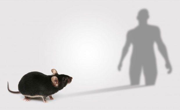 Mouse disease models