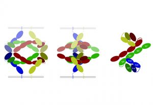 Schematic reconstruction of the Robo1 structure. IMAGE: Andrew McCarthy / Structure