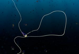 A condensin protein complex creates a loop in DNA. IMAGE: Cees Dekker Lab TU Delft/Scixel