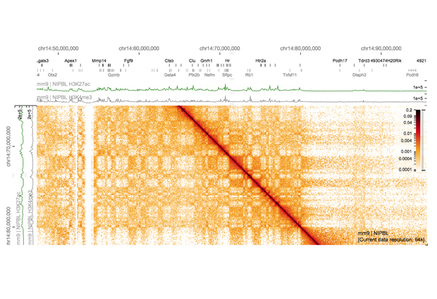 HiGlass (http://higlass.io) is an exploratory visualization tool for genomic data developed by Nils Gehlenborg and his team that provides analysts with a flexible interface to explore genomic and epigenomic data, including genome wide interactions, across multiple scales. IMAGE: Nils Gehlenborg