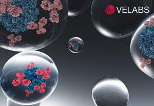 EMBL spinoff Velabs Therapeutics to help antibody discovery. IMAGE: Velabs Therapeutics
