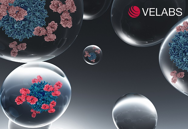 EMBL spinoff Velabs Therapeutics to help antibody discovery. IMAGE: Velabs Therapeutics