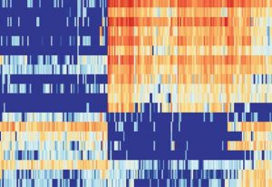 A heatmap graph displaying high (red) or low (blue) levels of gene expressions in different cells.
