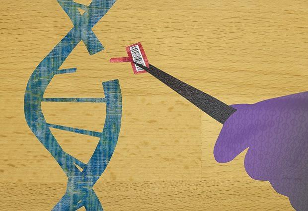 New Platform Transforms CRISPR Gene Editor Into Precision Tool. IMAGE: Irvine/NIST