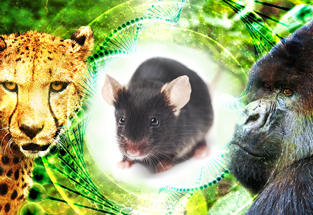Cheetah, black mouse and gorilla on green background