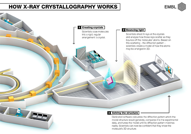 Infographic on how X-RAY crystallography works