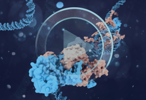 How cellular signalling controls chromatin modification. IMAGE: Aleksandra Krolik/EMBL