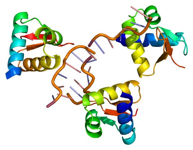 RNA-binding protein