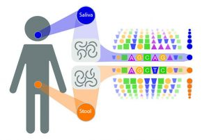 Mouth and gut are highlighted as locations for genetic material compared by scientists