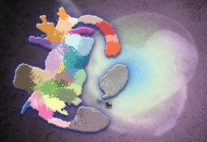 Single-cell sequencing mouse embryos