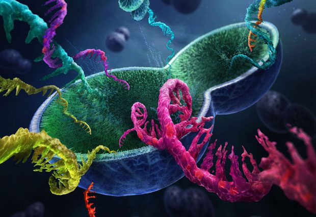 The strands of RNA within a single yeast cell can now be studied across the entire genome. IMAGE: Tobias Wüstefeld