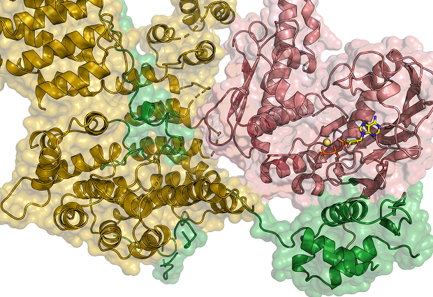 Structural biology image of the condensin complex.