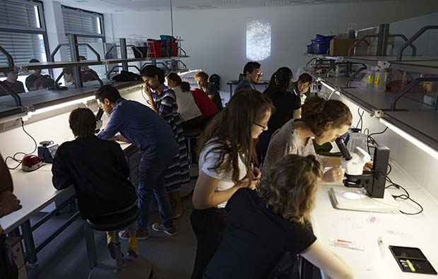 Students collaborate in the lab