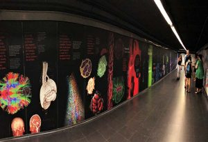 The mural commemorating the 500th anniversary of the death of Leonardo da Vinci. Ciutadella | Vila Olímpica station, Barcelona. PHOTO: James Sharpe/EMBL