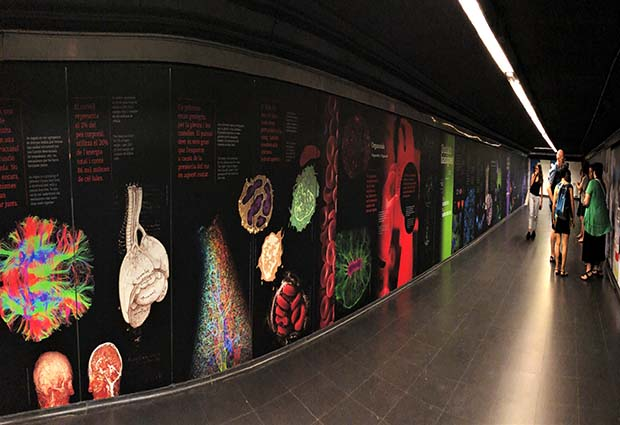 The mural commemorating the 500th anniversary of the death of Leonardo da Vinci. Ciutadella | Vila Olímpica station, Barcelona. PHOTO: James Sharpe/EMBL