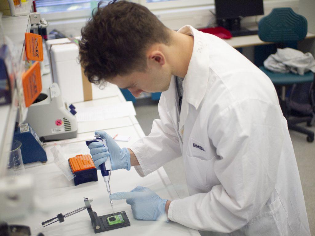 preparing RNA probes